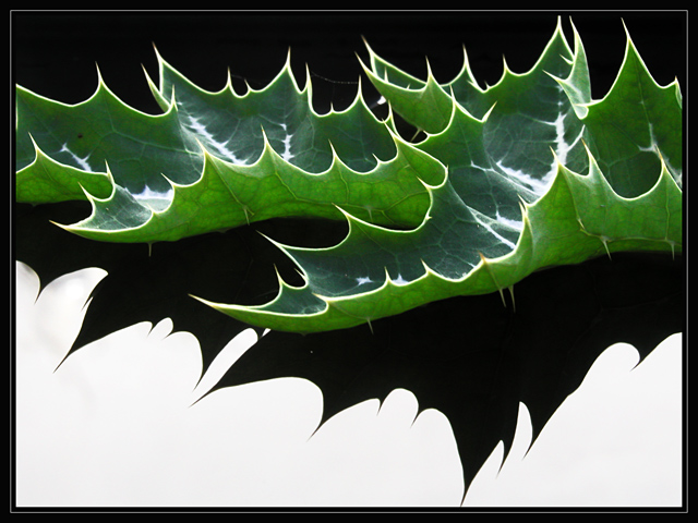 Thistle Leaf
