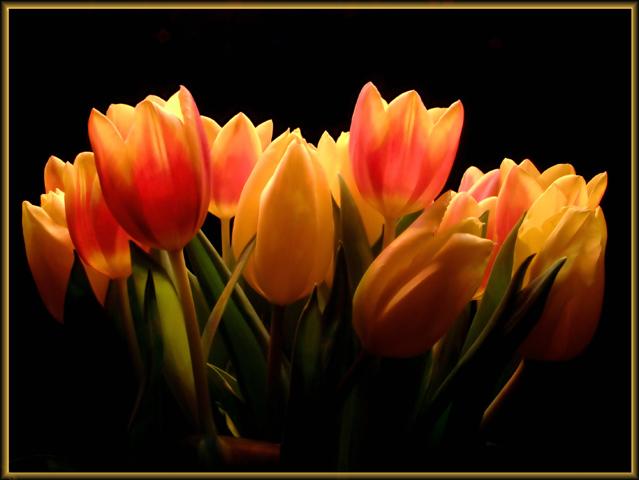Decorative Tulips