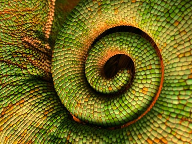 Living Texture