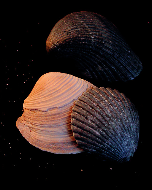 shell contrasts
