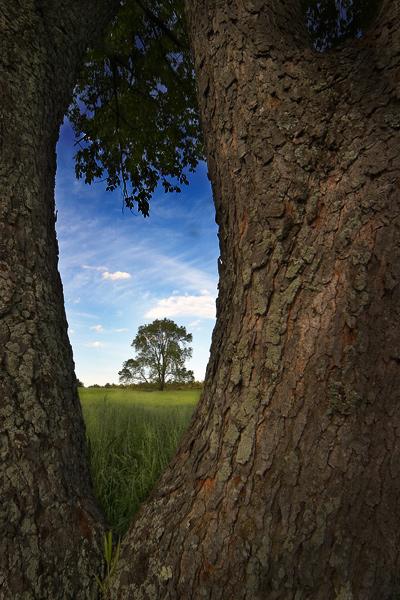 The Far Tree