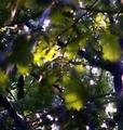 Sunlight thru the leaves