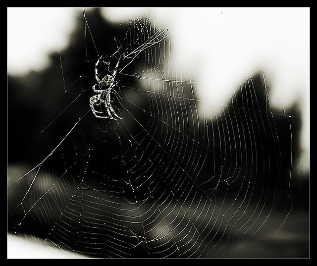 Silken Intricacy
