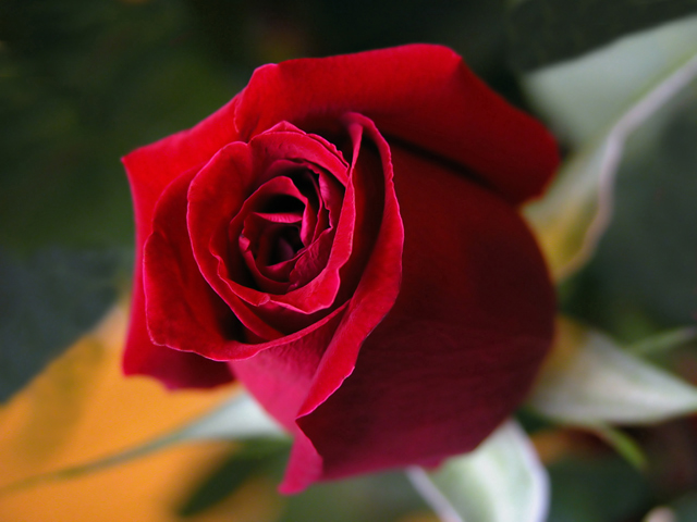 The Simple Complexity of a Rose