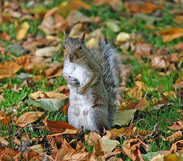 Good Morning Mr. Squirrel