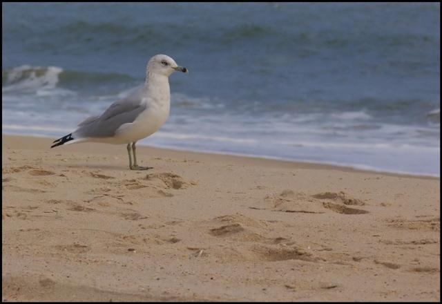 Solitude by the sea