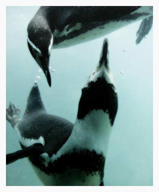 Penguin Choreography
