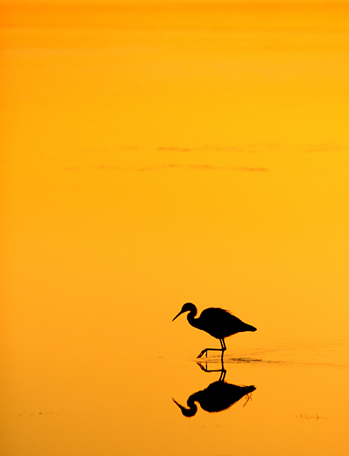 Sunset Feeding