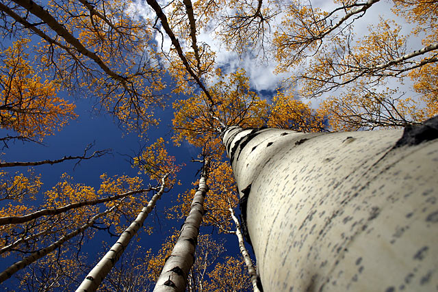 Autumn in the Rocky Mountains.
