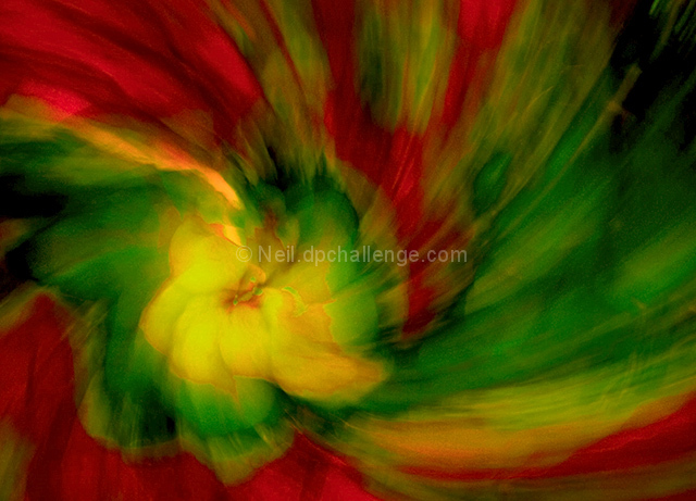 Whirlwind Passion (Floral)