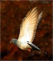 Flying 'Free'
