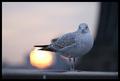 Dawn Watch (Brooklyn Bridge, NYC)