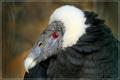 vulturebabe...dressed to kill