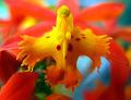 Bird-Shaped Orchid Petal