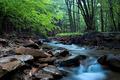 A hidden stream...