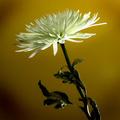 A Valentine's Flower