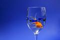 Goldfishy