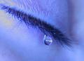Last Tear