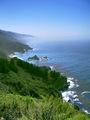 Kelp-Lined Coast