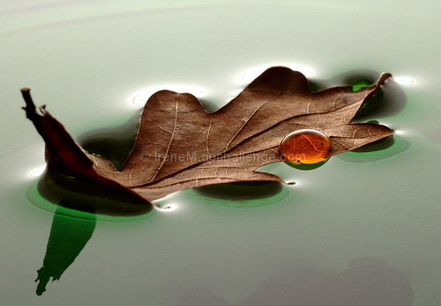 old leaf, floating....