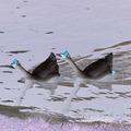 Ghoulish geese make landfall
