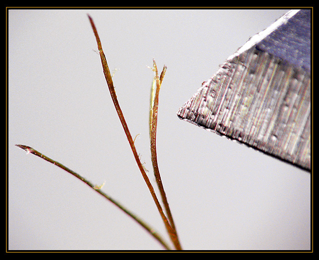 Splitting Hairs... (in a hair's breadth DOF too!)