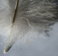 Feather - Light On White Challenge