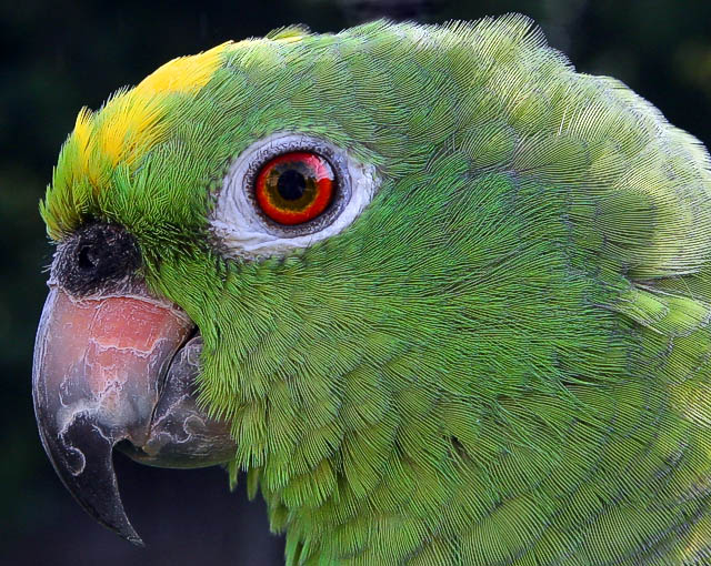 Take 2 Peso (Birds Challenge)