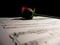 Roses Make Lovely Bookmarks...