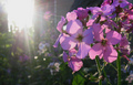 Nature's Radiance
