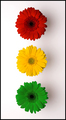 If Traffic Lights Were Made of Daisies.