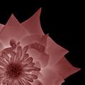 Pink Rising