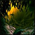 The Entrance (Epiphyllum oxypetalum)