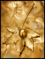 Golden Cliche