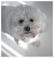 Millie: White on White