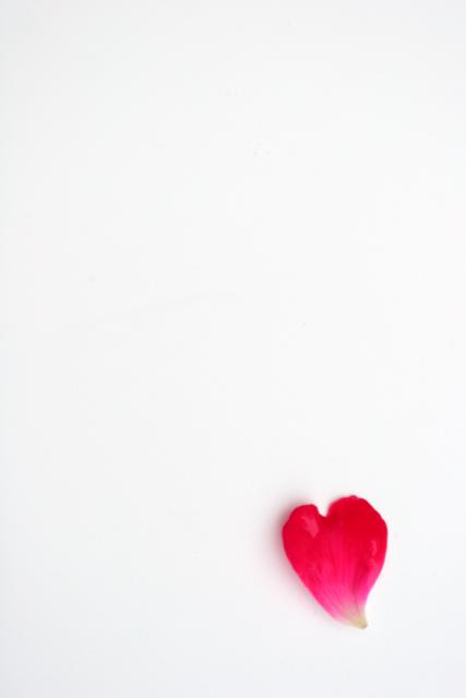 Single petal of rose blossom by c fox dpchallenge for Individual rose petals