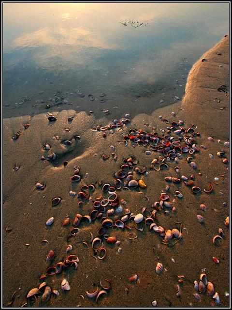 Mudflat, Pebbles, Shells — Sundown