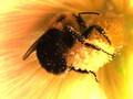 Pollen Catcher