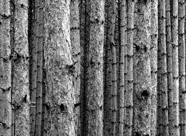 bosque i ramas
