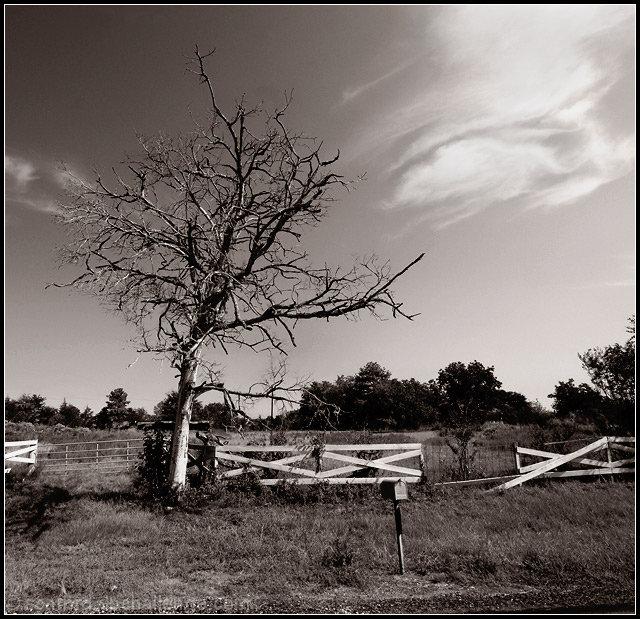 Dead Tree Standing