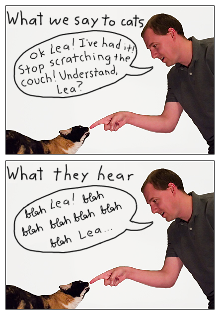 What We Say to Cats...and What They Hear