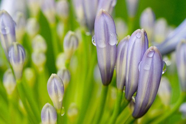 Like Painted Flowers