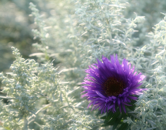 Frost, Sun and Purple