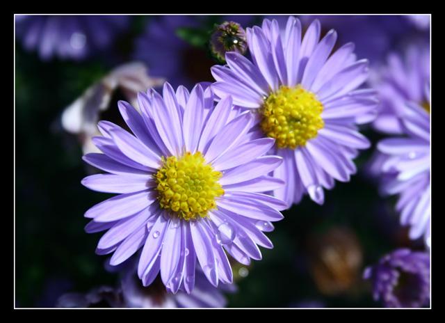 Purple Floral World