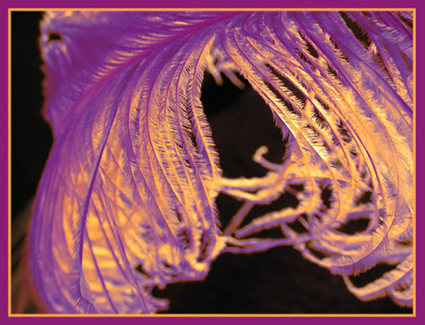 Purple Tendrils