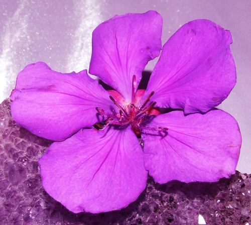 Purple Naturally