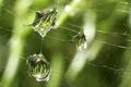Rain on a Web