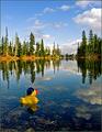 Duck on Goose Lake