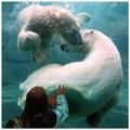Water Bears!