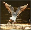 Water Wings.
